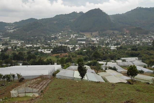 Zinacantan Greenhouses