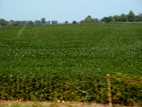 beans indiana crops soybeans