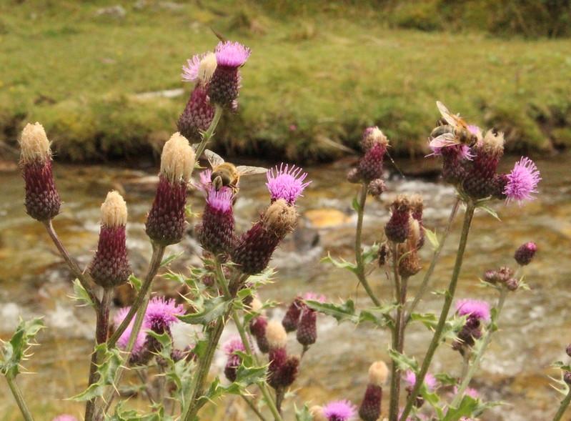 Blumen & Bienen