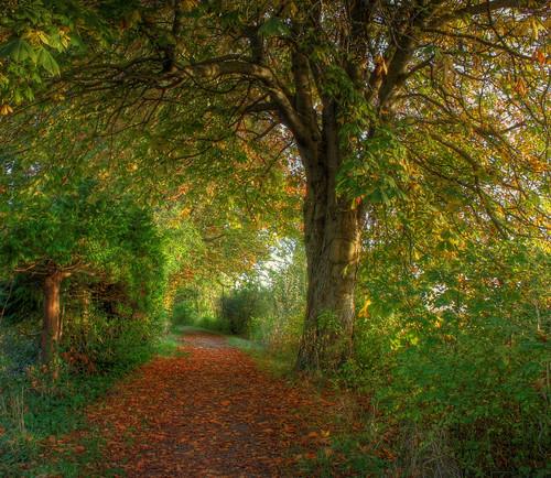 autumn colour leaves forest bc richmond trail hdr terranova idream naturepoetry mygearandme mygearandmepremium mygearandmebronze mygearandmesilver mygearandmegold mygearandmeplatinum blinkagain bestofblink