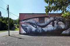Living Walls - Albany, NY - 2011, Sep - 15.jpg by sebastien.barre