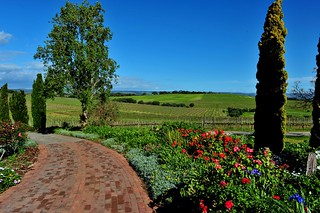 View from Coriole Wines | by thinboyfatter