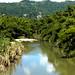 bamboo en el rio