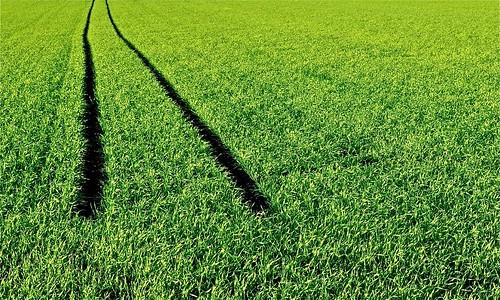 green field nikon feld stop explored grün flickrduel d5000 robertlesti