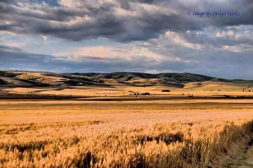 sky mountains clouds oregon or wheat farmland fields pendleton hdr imagebydesignworks