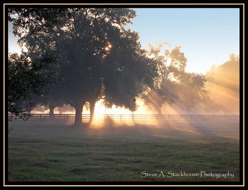sunlight nature sunrise landscape florida scenic pasture fl ocala lightshafts