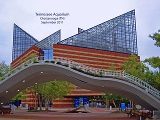 Tennessee Aquarium -- Chattanooga September 2011 | by Ron Cogswell