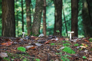 Forest Mushrooms | by A Storybook Life