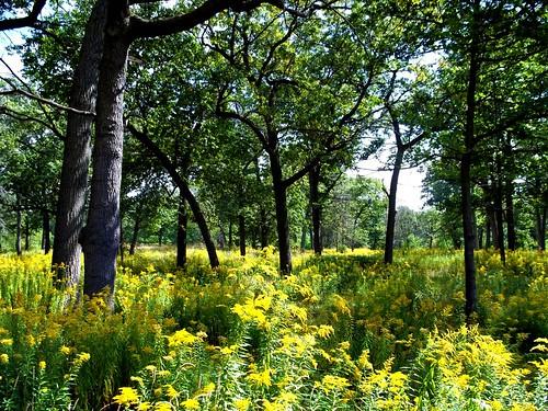 park ontario landscape highpark meadow parkland naturephotography torontoontario urbanpark