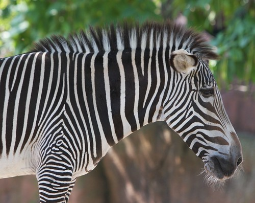 St. Louis Zoo ~ July 2010   by claire_timm