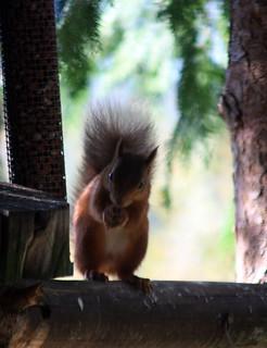 Inshriach Nursery Birthday Cake & Red Squirrels