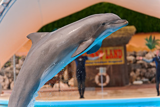 Jumping dolphin | by Tambako the Jaguar