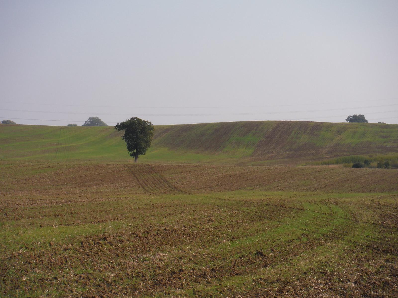 Fieldscape (II) SWC Walk 159 South Woodham Ferrers to North Fambridge