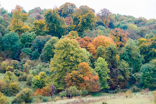Autumn leaves in Tring Park