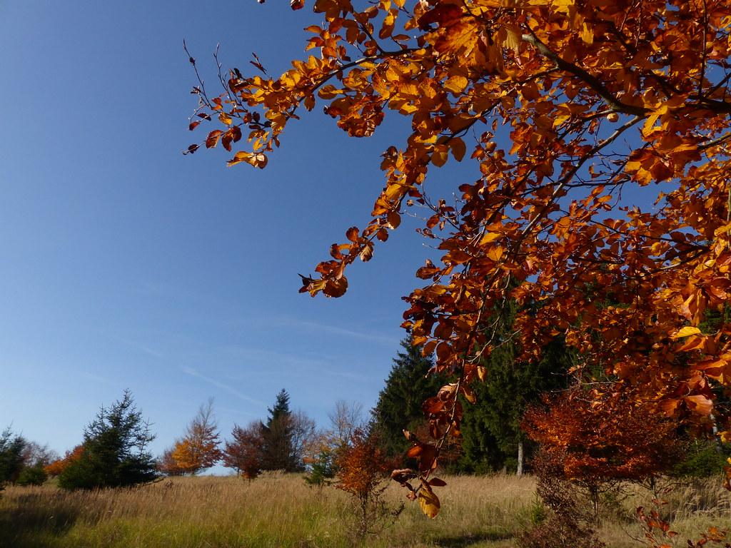 Gebietsbild , NGIDn21   naturgucker.de / enjoynature.net ...