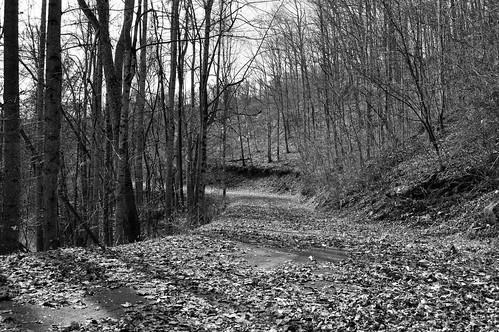 road autumn white mountain black mountains fall monochrome beauty leaf nc north maggie covered valley carolina mtn smoky smokies rd