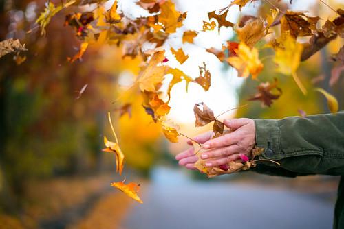 Leaf Fall   by Nick Harris1