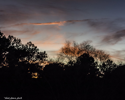 trees nature silhouette clouds unitedstates southcarolina