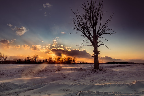 tree winter cold midmichigan michigan field campesina campo invierno nube cloud atardecer canoneos5dmarkiv barren drift snow puestadelsol sunset frigid coldlooking bare