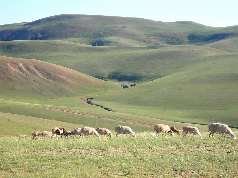 mongolia0072