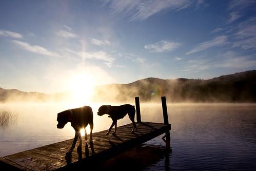 dog mist mountains sunrise dock vermont ranger silhouettes newengland chloe boxer vt lakeeden sigma1020