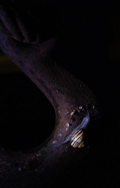 night time snail