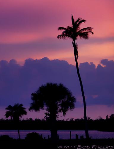 sunset gulfofmexico silhouette clouds palmtrees pineisland bokeelia