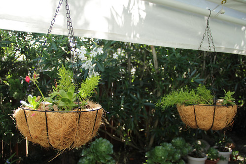 Hanging Plants | by _elvin