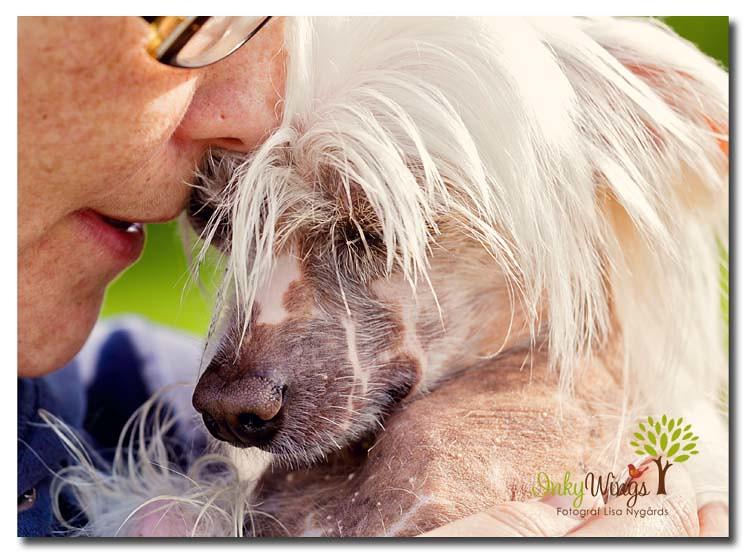 Kinesisk Nakenhund Lisa Nygards Flickr