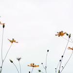 鈍(にび)色に花