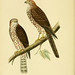 A history of the birds of Europe, not observed in the British Isles. v.1