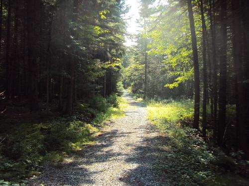 park new trees saint forest john woods path brunswick rockwood