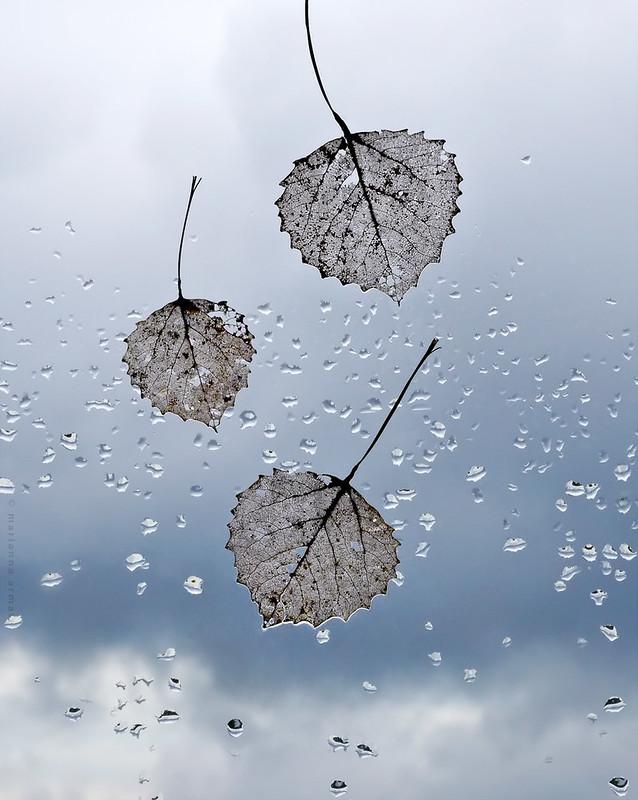 fall = falling