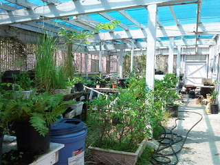 Greenhouse Space- The Learning Garden at Venice HS | by Veronica in LA