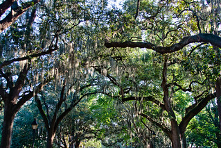 CP209 Live Oaks and Spanish Moss | by listentoreason