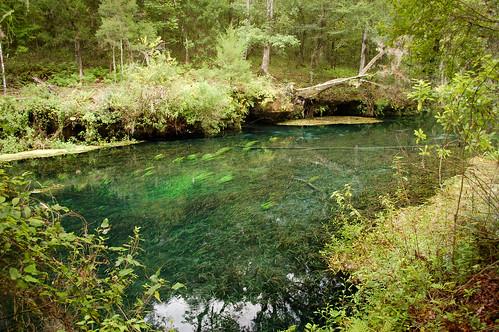 statepark park water spring florida springs freshwater ichetuckneesprings