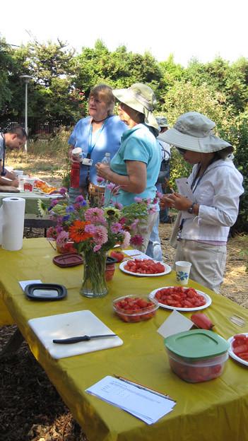 Tomato judging 0174 master gardeners of santa clara - Master gardeners santa clara county ...