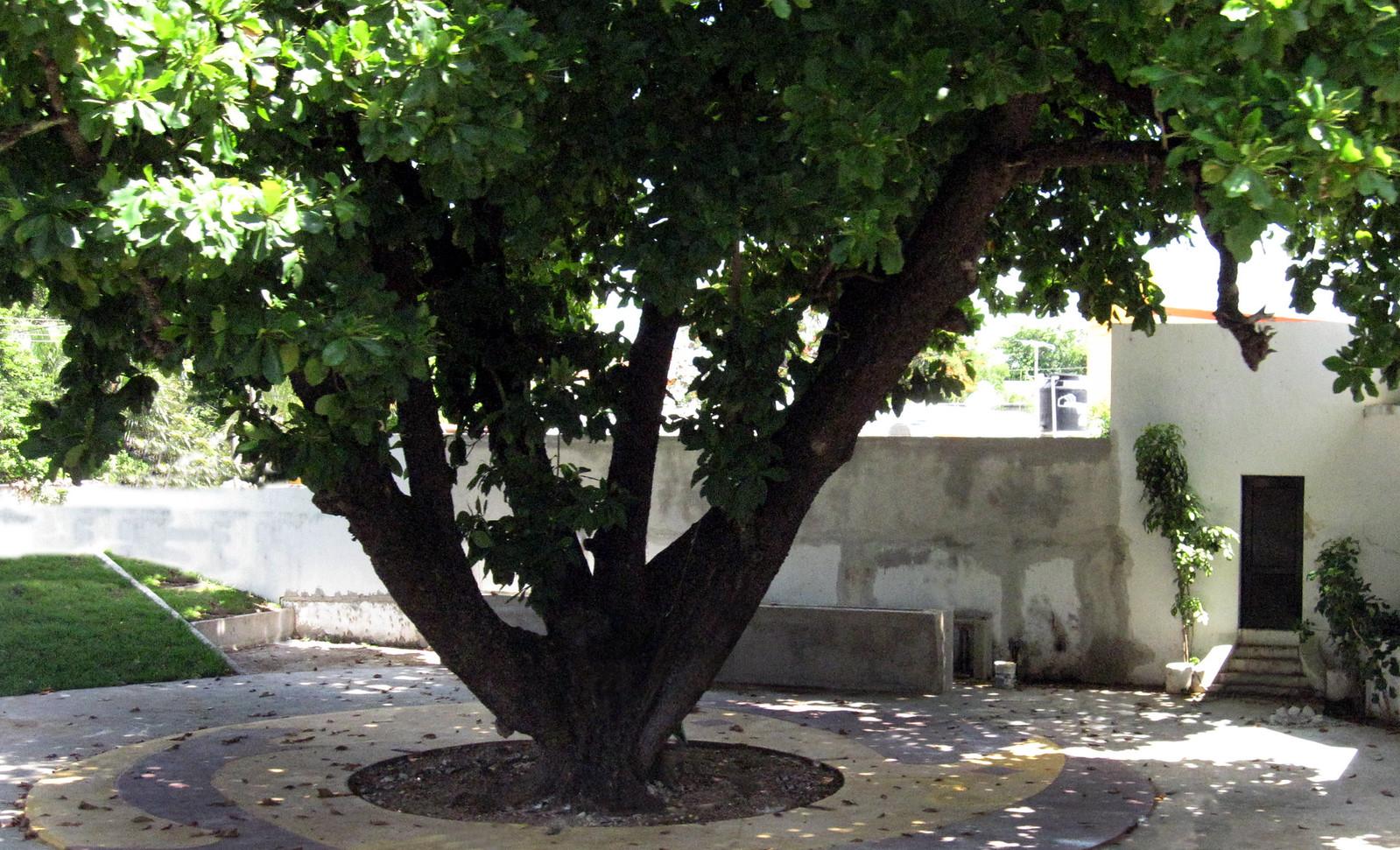 Mérida 46