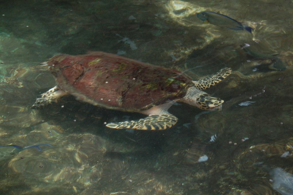 Australia Great Barrier Reef Green Island Resort Tur
