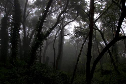 trees fog forest nationalpark foggy valley daybreak palakkad nilgiris silentvalley lpremote