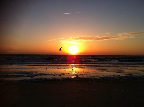 sea birds photography seabirds sunrisesunsetsceniccloudsbeach sunrisesunsetsceniccloudssky oceanseabeachseashellsphotographynature