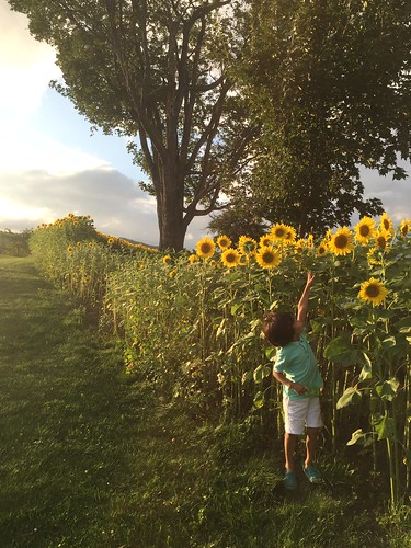 sunset japan kid hokkaido child sunflower