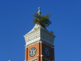 Tree Growing From Court House Tower Every Town Has It S