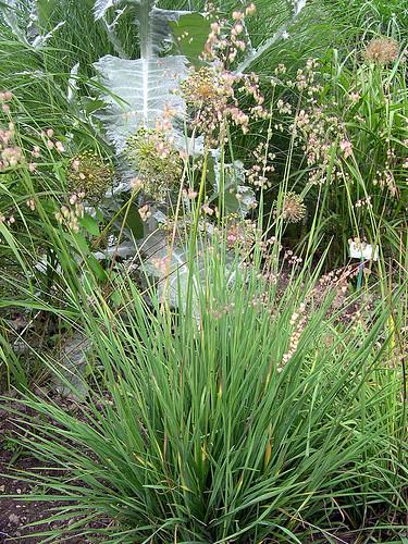 mymilla040   by mymilla - biopool & garden