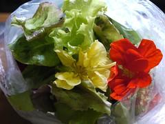 水, 2011-08-03 18:37 - Upper Villageで毎週水曜日にあるファーマーズマーケットで買った葉っぱ
