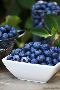 blueberries-final | by mhchipmunk