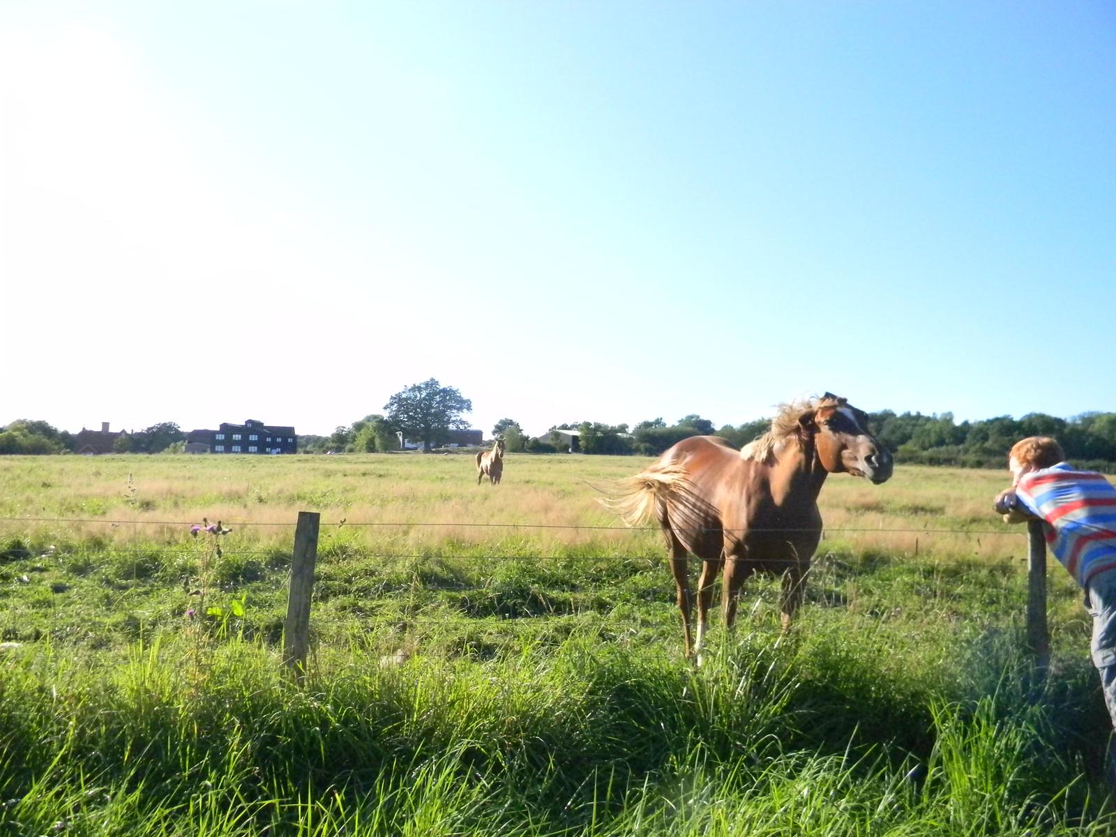 Horses Ashurst Circular