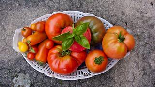Tomato harvest   by Elise de Korte