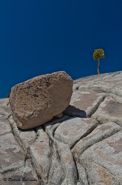 Glacial Erratic on Granodiorite with Jeffrey Pine