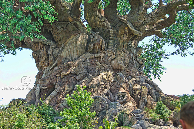 The Spectacular Tree of Life
